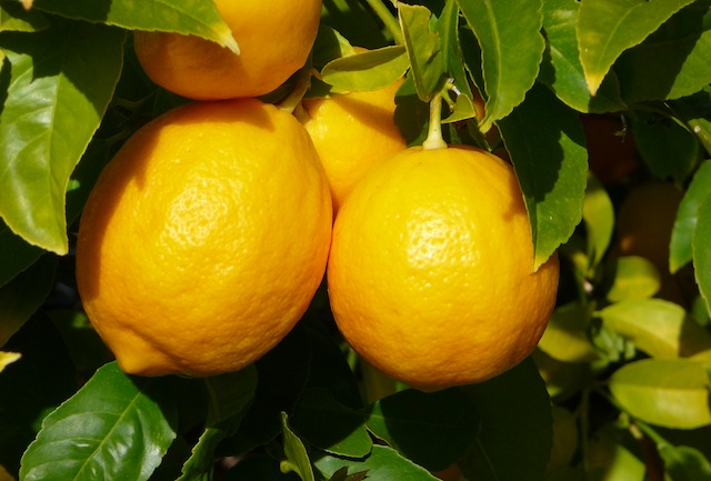 Lemon Peels: The Cheapest Investment In Your Health?