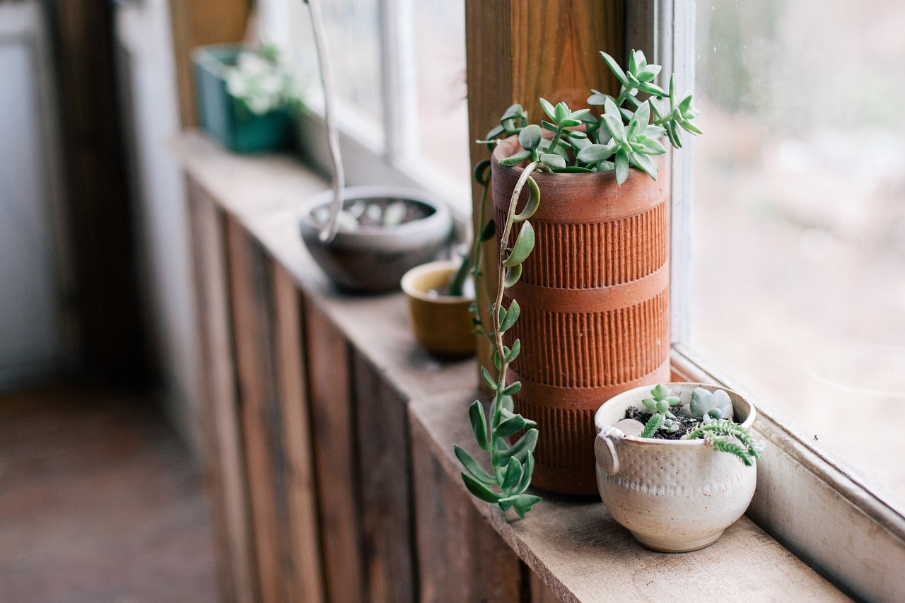 You can never have enough plants // www.brokeandchic.com