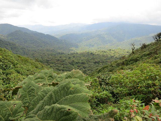 Monteverde Cloud Forest Reserve // brokeandchic.com