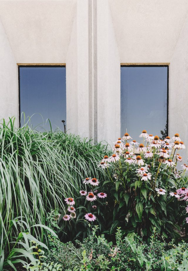 How to Increase Your Landscape's Value (on a Tight Budget)