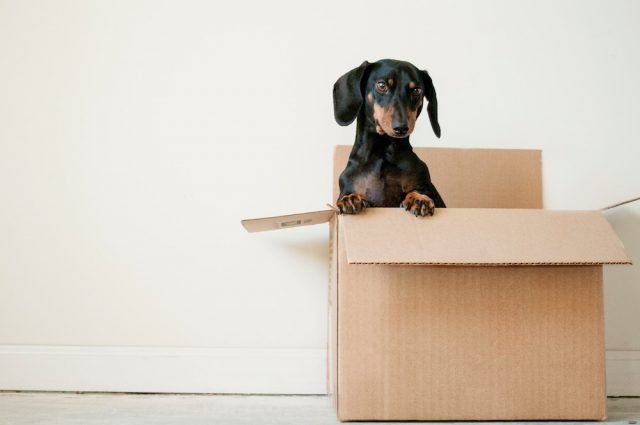 Essential Tips for Moving Home