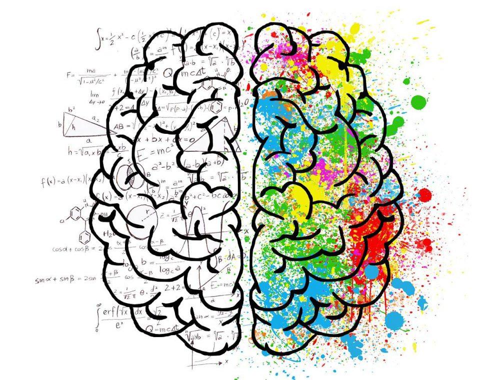 Provigil Effects On Brain Function