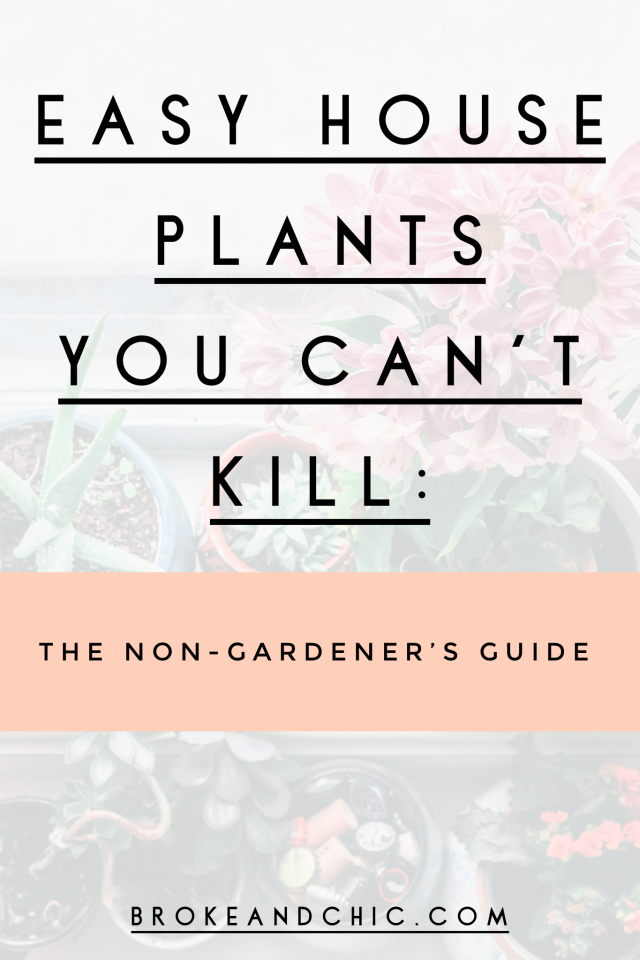 Easy House Plants You Can't Kill: The Non-Gardener's Guide