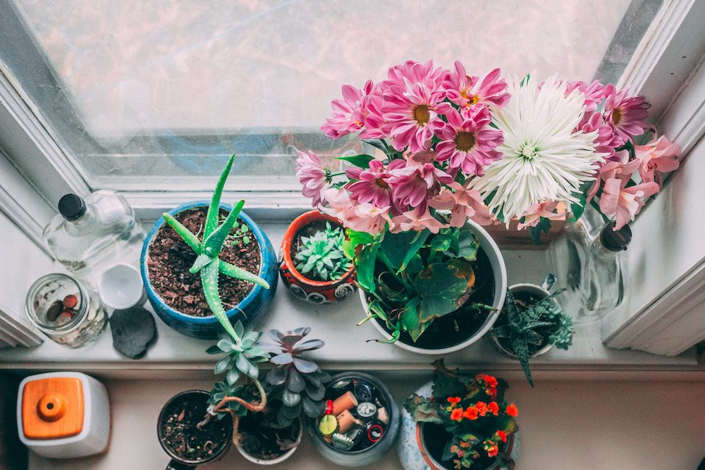 Indoor Plants with Beauty Benefits