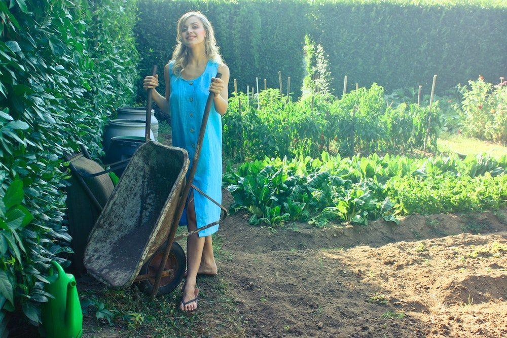 affordable landscaping tips