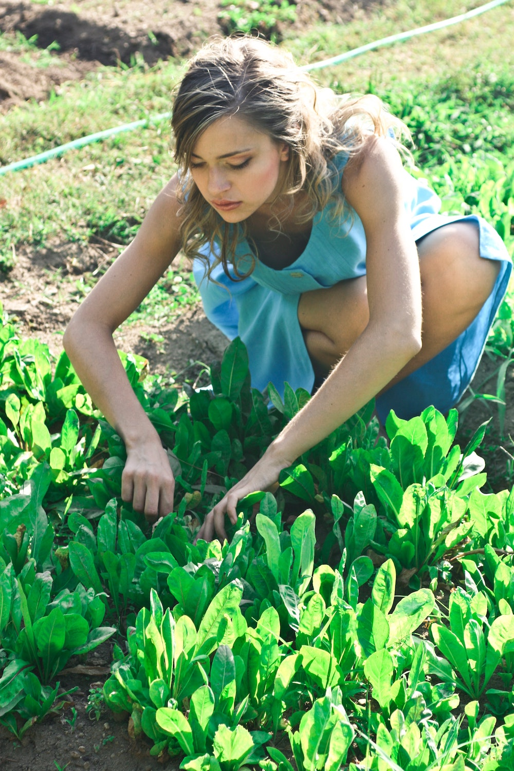 Wallet-Friendly Landscaping Tips for People on Tight Budget