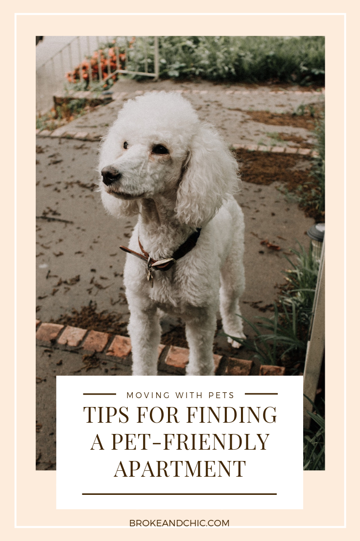 Tips for Finding a Pet-Friendly Apartment in NYC
