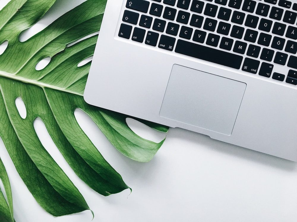 laptop and palm leaf