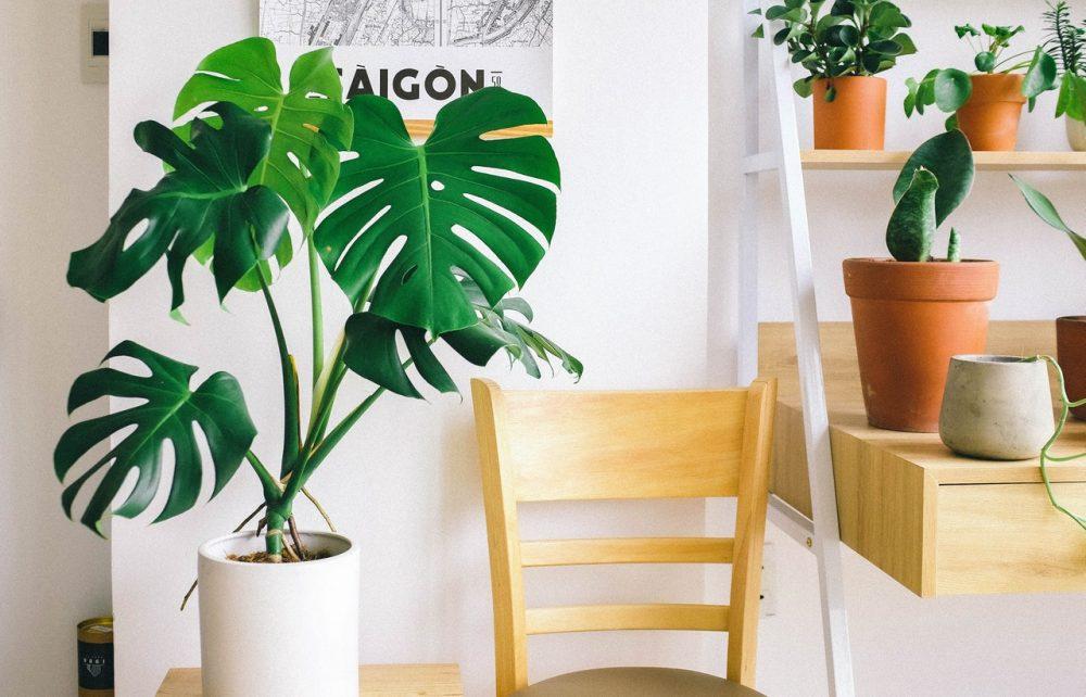 Tropical plants