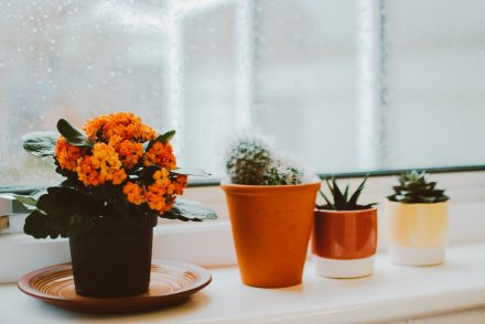 plants on a window sill