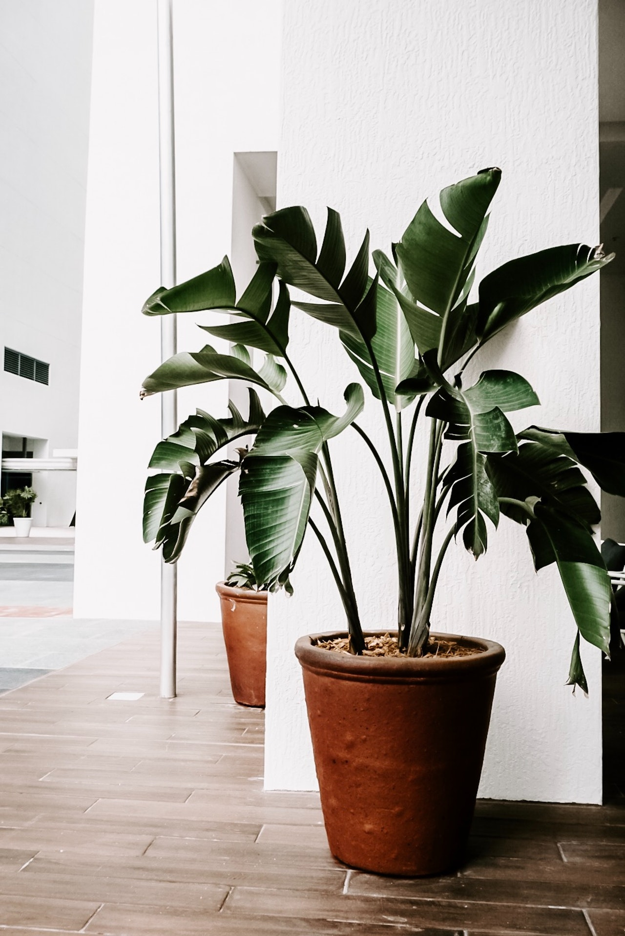 tropical plant in house