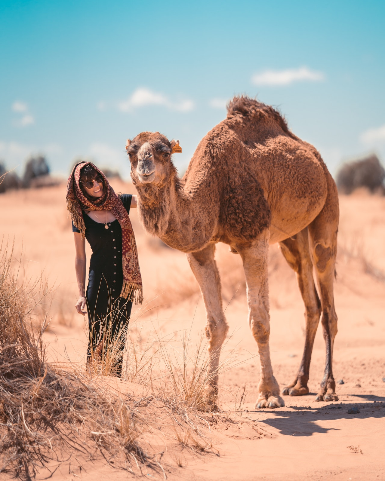 Camel and woman in Morocco