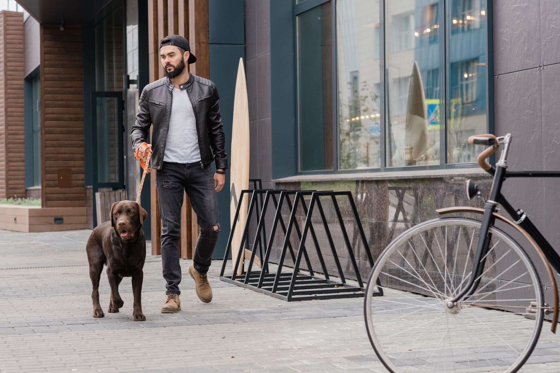Bearded young man in jeans and leather jacket moving down street of the city while chilling with purebred dog