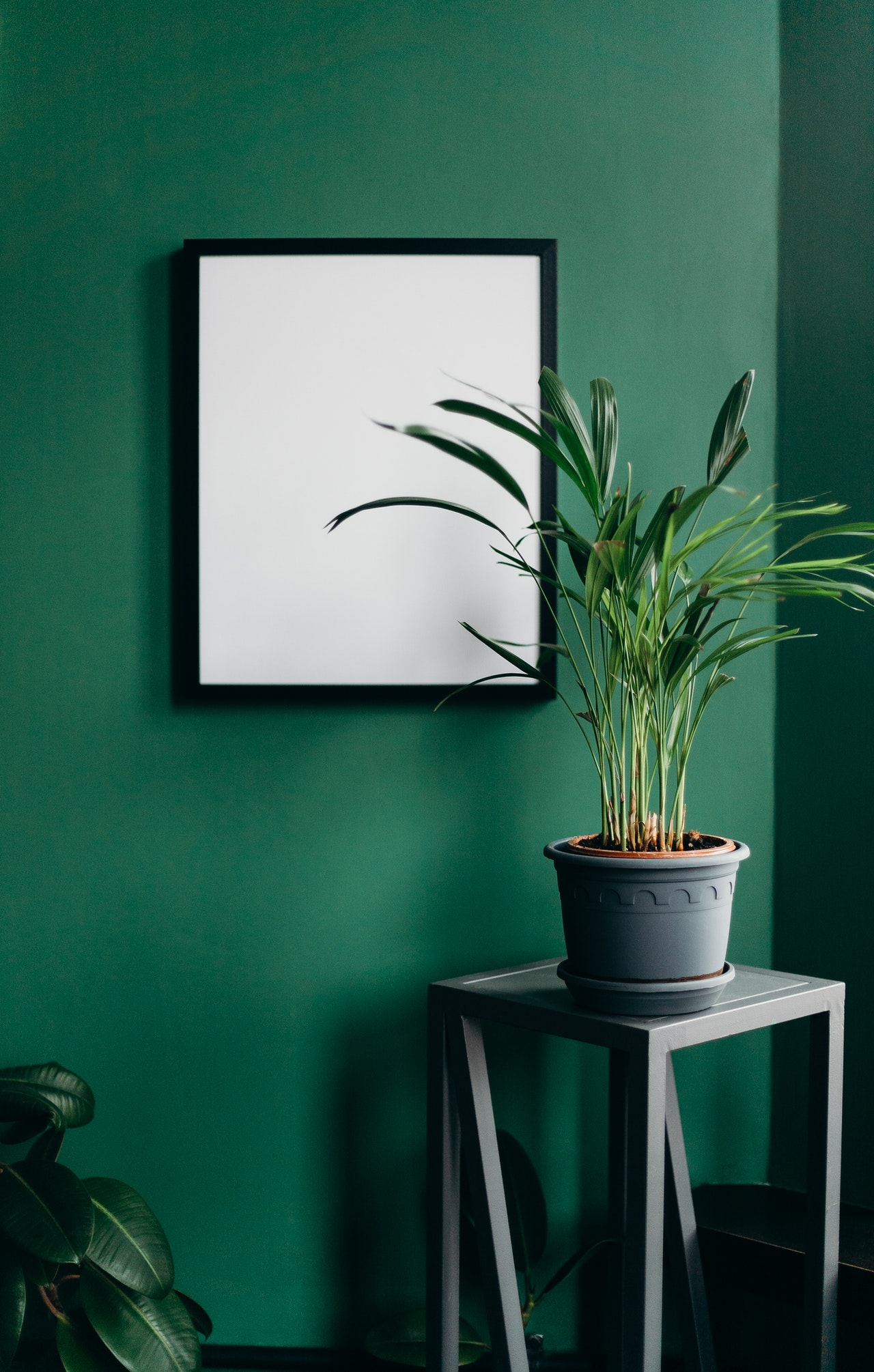 Green statement wall