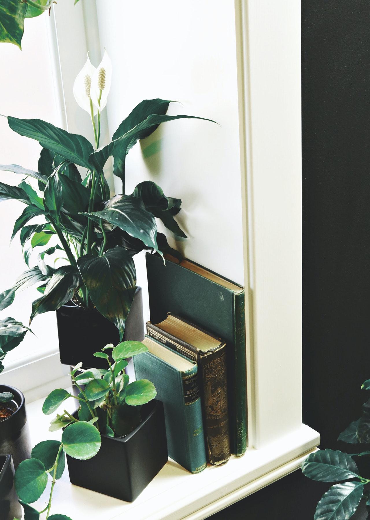 indoor plants near window