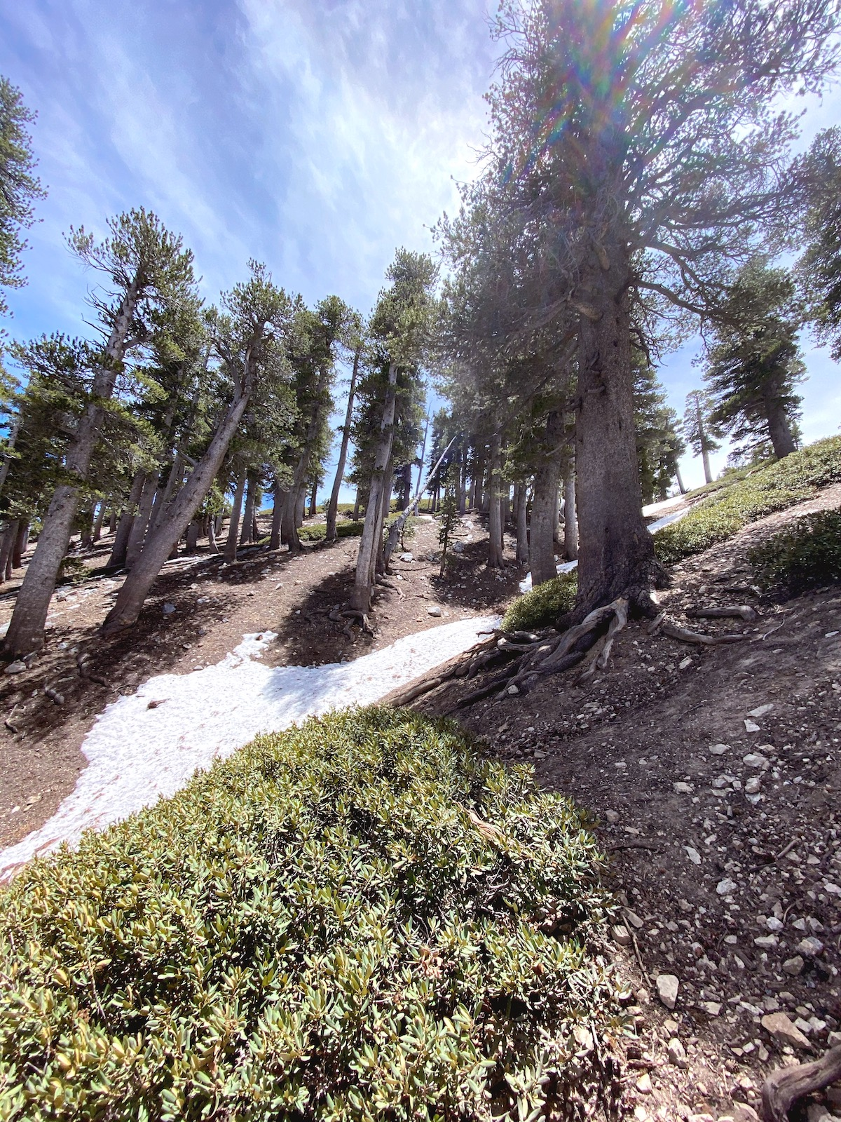 Mount Baden-Powell hike