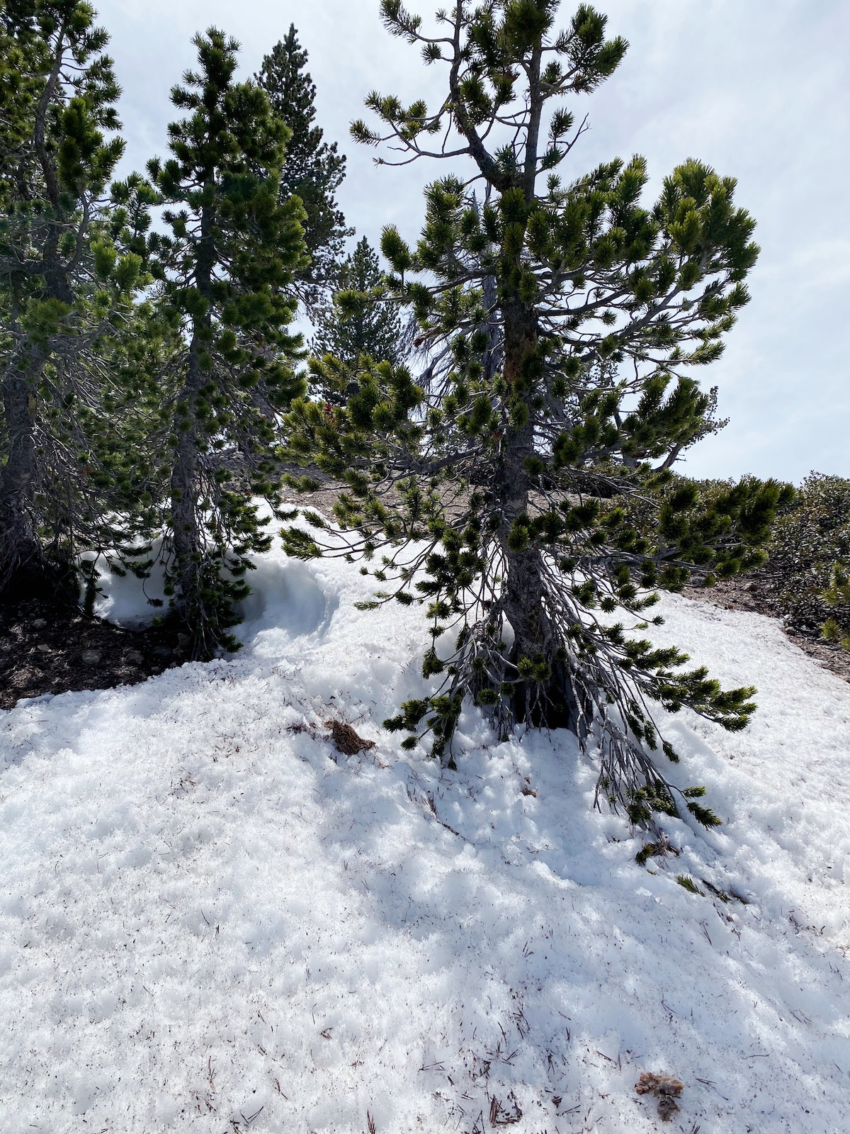 Mount Baden-Powell snow