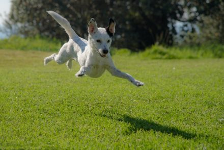 hyper dog