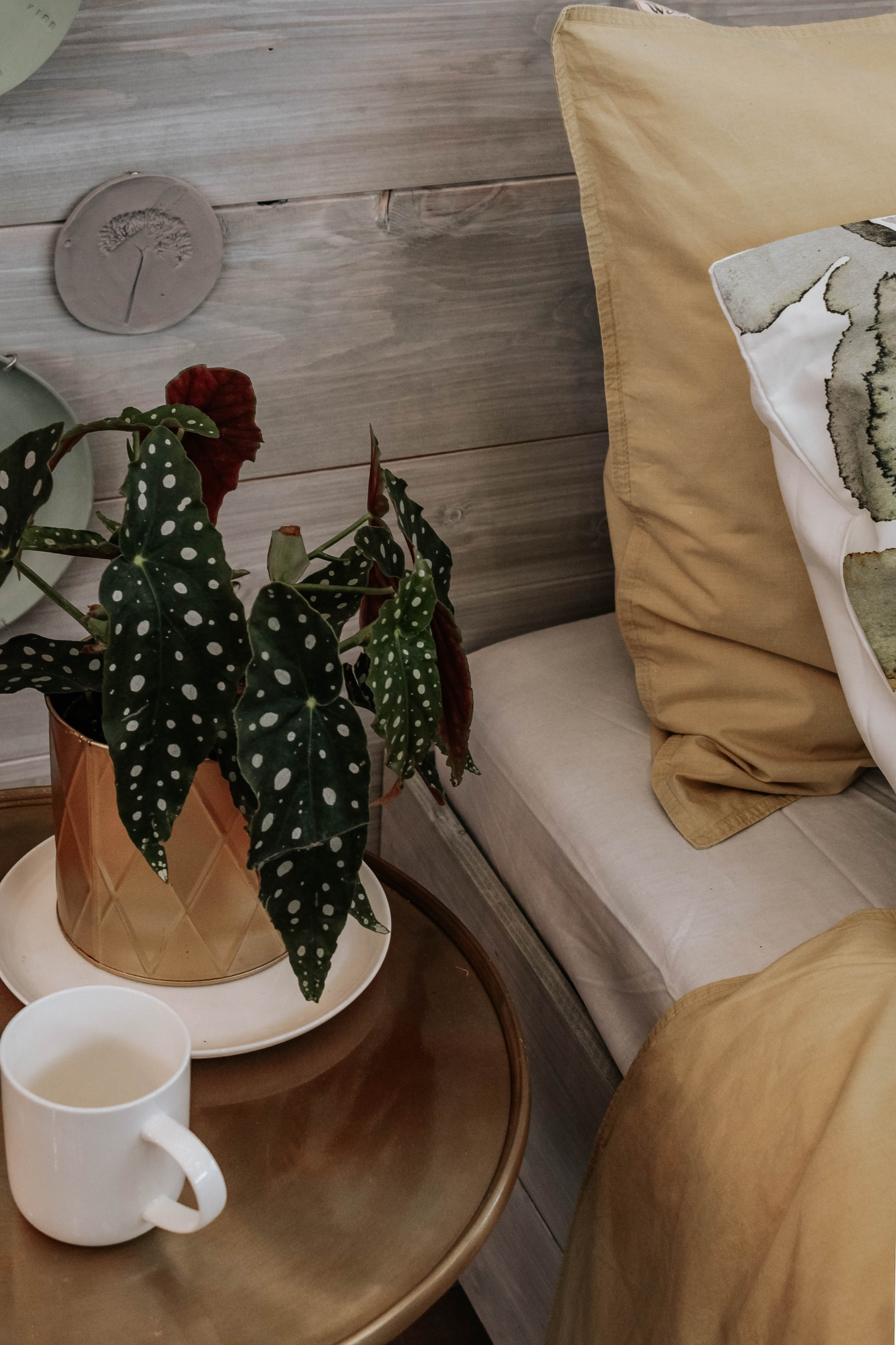 plants on bedside table