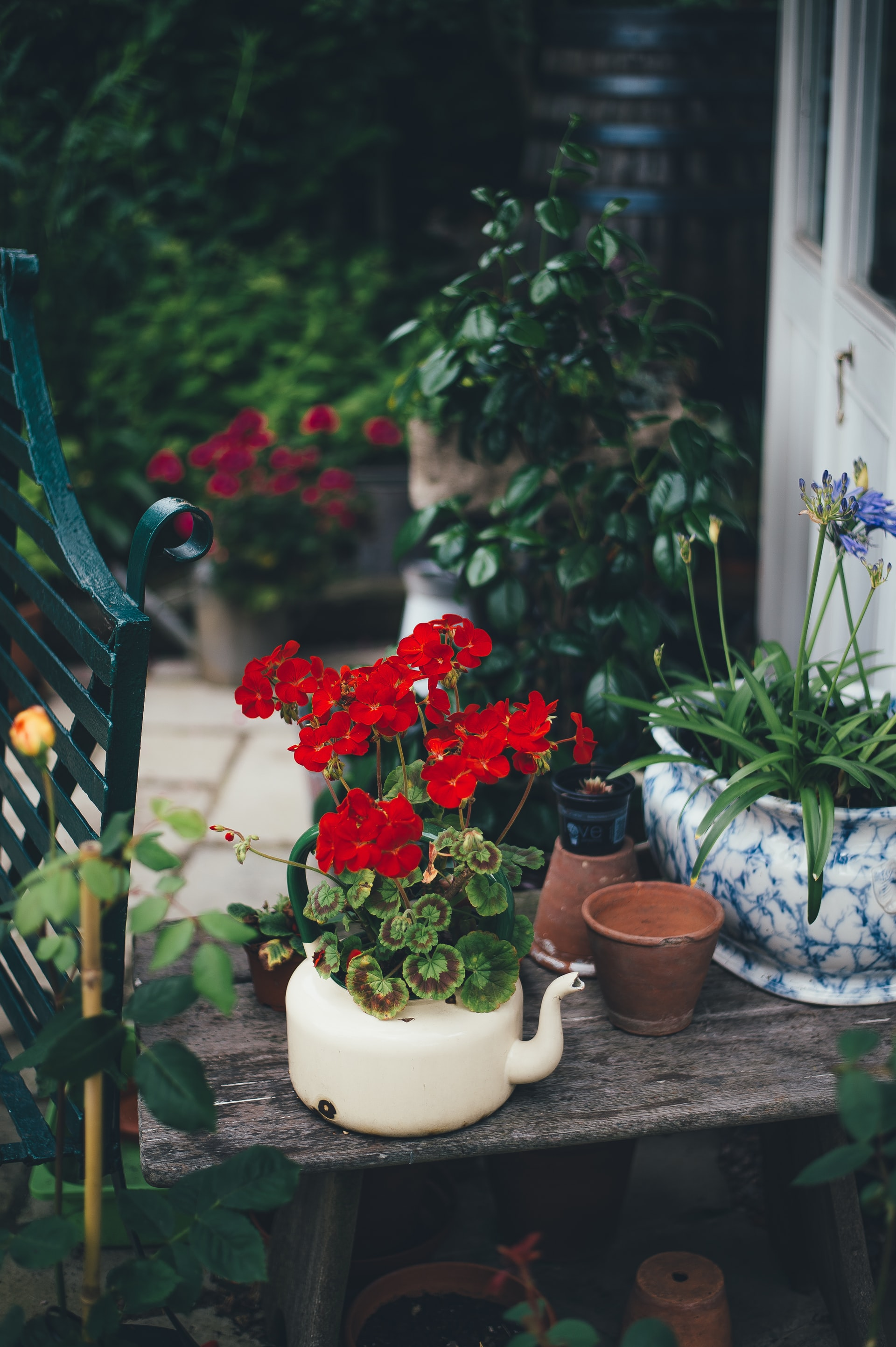 flowers planted in a teapot