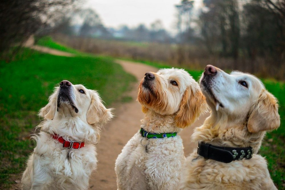 three dogs getting treat