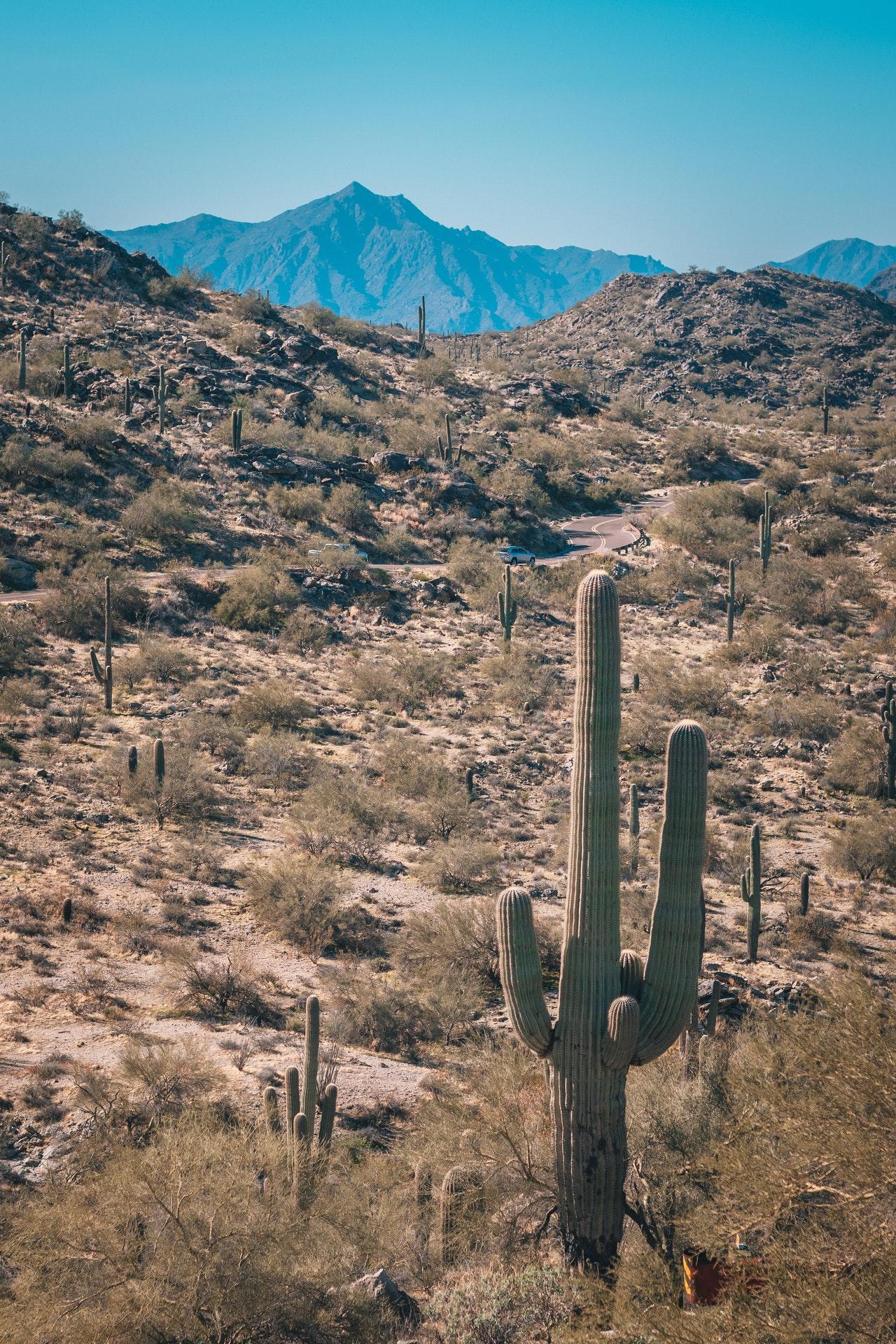desert of Arizona