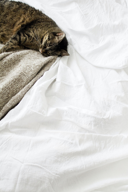 cat sleeping on white duvet