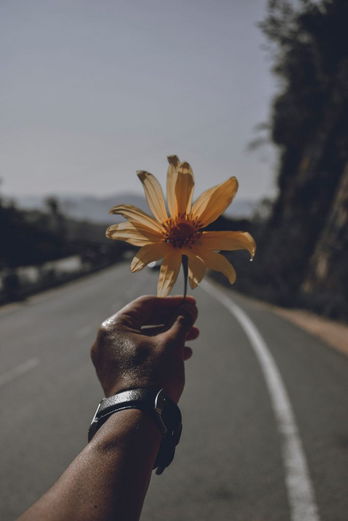 Person standing in road holding up a yellow flower.