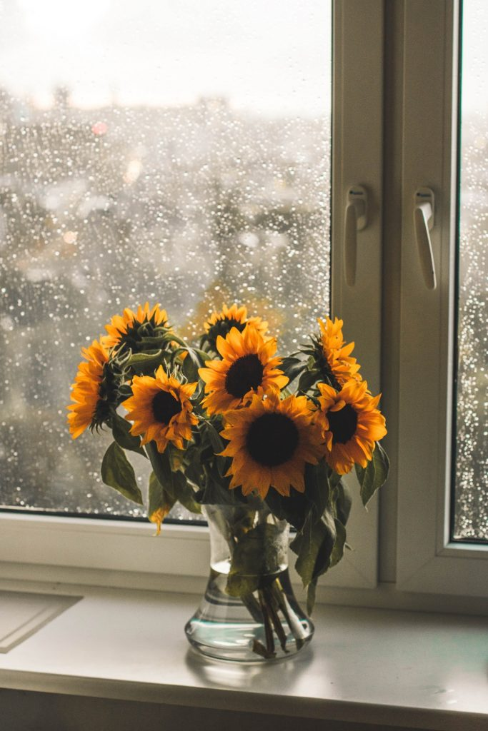 Sunflowers in a vase in front of a window on a rainy day.