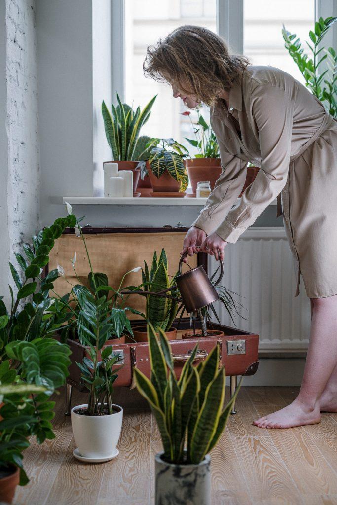 Woman in tan dress watering plants in  her home.