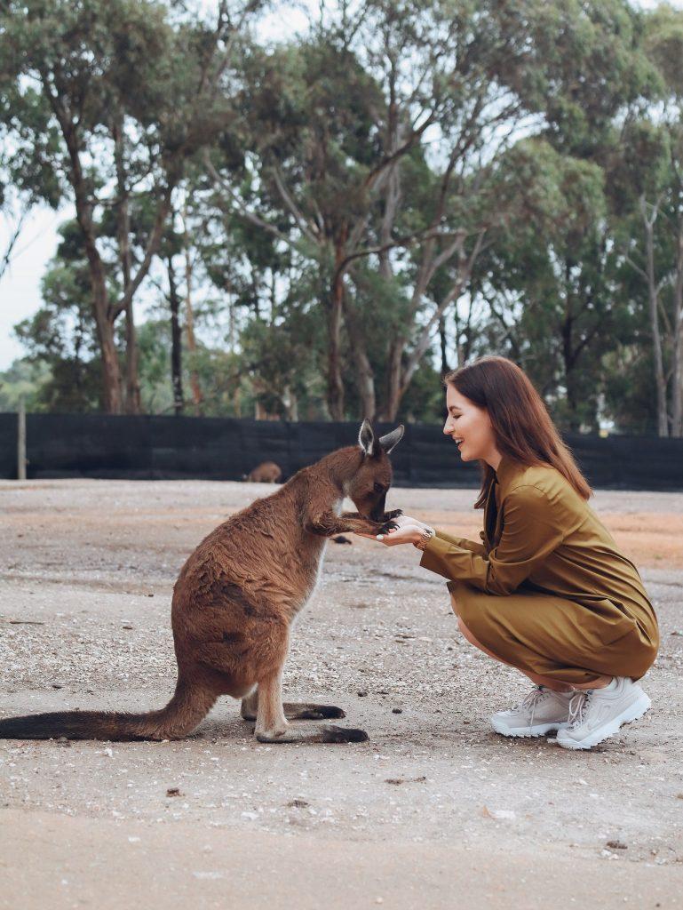 Woman petting a kangaroo in Australia.